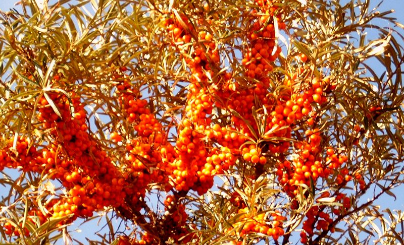 Orangefarbene Perlen liefern Vitamine pur