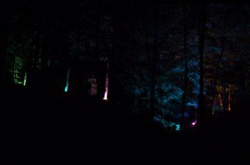 Wendeln und Wandeln im geheimnisvollen Licht: Lichterfest in den Baumwipfeln