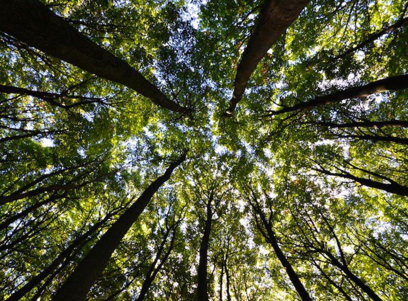 """5 Jahre UNESCO Weltnaturerbe: Die Inselexperten gratulieren den """"Alten Buchenwäldern"""""""