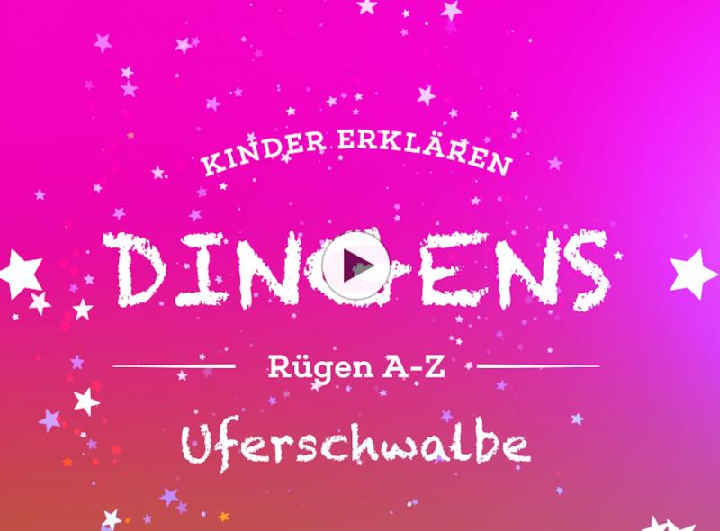 """""""Dingens – Rügen von A bis Z"""": U wie Uferschwalbe"""