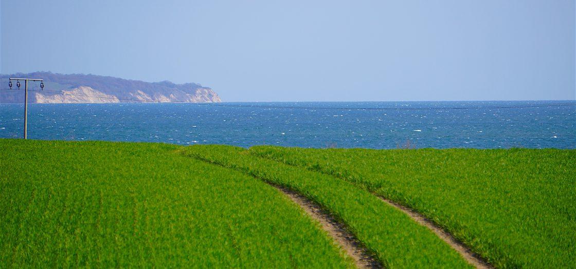 Saftig grüne Felder auf Rügen