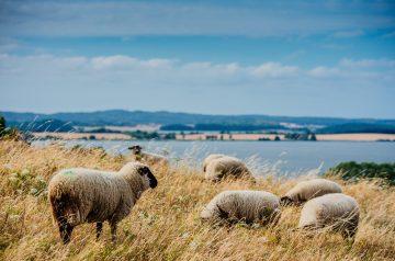 Die 5. Rügener Woche der Nachhaltigkeit