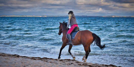 Ostsee_Galopp_Pferd